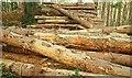 J3630 : Woodstacks, Donard forest by Albert Bridge