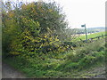 NZ2437 : Footpath leading to the River Wear by Les Hull