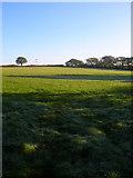 TQ1814 : Field near Upper Northover Farm by Simon Carey