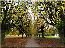 TA0729 : West Park Tree Avenue by Andy Beecroft