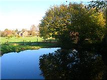 TQ2115 : Tanyard Pond by Simon Carey