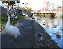SK5803 : Birds along the Grand Union Canal by Mat Fascione