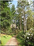 NS1385 : Path, Benmore by Richard Webb