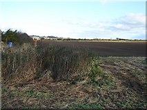 NU2314 : Field Near Longhoughton by Ian Paterson