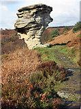 SE8791 : Sandstone outcrop, Low Bridestones by Peter Church