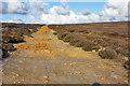 SE7291 : Towards Barker Slack by Peter Church