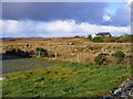G7494 : Cattle on rough grazing, Tully More Townland by Mac McCarron