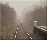 TA0623 : I Walk the Line by David Wright