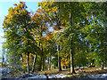 SU7495 : Langleygreen Plantation, Lewknor by Andrew Smith