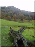 NY3404 : Loughrigg Fell by Michael Graham