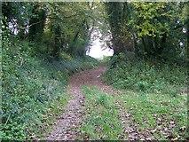 SY7699 : Bridleway, Cheselbourne by Maigheach-gheal