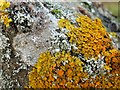 NS3678 : Lichens on a boulder in a disused quarry by Lairich Rig