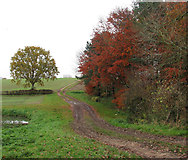 TG0723 : Footpath to Kerdiston Old Hall by Evelyn Simak