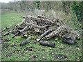 TL5356 : Habitat pile by Hugh Venables