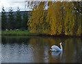 SE9035 : Mill pond, South Newbald by Paul Harrop