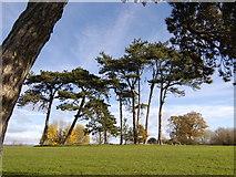 ST1477 : Trees in Fairwater Park by John Carter