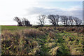 TA3822 : The copse at the end of Old Hive Dike by Peter Church