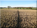 TQ1760 : Malden Rushett: Footpath towards Rushett Farm by Nigel Cox