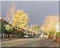 SP3079 : Glendower Avenue, Whoberley by E Gammie