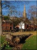 SX9192 : Felled tree, St Bartholomew's Lower Cemetery, Exeter by Derek Harper