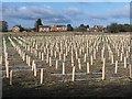 TQ7360 : New Vineyard near Eccles by David Anstiss
