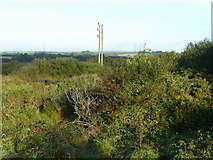 SX0063 : Vegetation on Retire Common by Jonathan Billinger