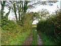 SX0772 : Track in Cornish farmland 2 by Jonathan Billinger