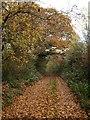 SX9494 : Pinwood Lane, Exeter by Derek Harper