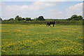 TL6756 : Horses in a field by Hugh Venables