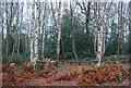 TQ5942 : Outdoor Classroom, Barnett's Wood by N Chadwick