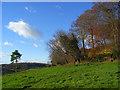SU8598 : Piggott's Wood, Hughenden by Andrew Smith