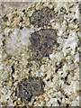 NS3675 : A lichen - Buellia aethalea by Lairich Rig