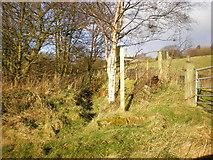 SE0328 : Footpath off the N side of Saltonstall Lane by Alexander P Kapp