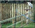 G9379 : Heron in Drumrooske by louise price
