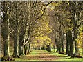NY9265 : Avenue of trees on Tyne Green (2) by Mike Quinn