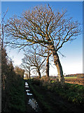 TG2834 : Bare trees growing on field boundary by Evelyn Simak
