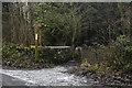 SD4879 : Footpath through woods near Storth by Tom Richardson