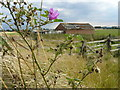 TG5209 : Ruined hut on Paddys Loke by Andy Jamieson