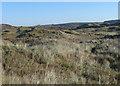 SS8576 : Grassy duneland, Merthyr Mawr Warren by eswales