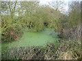 TL6452 : Small pond by Hugh Venables