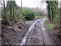 TG2726 : Public bridleway doubling as access track by Evelyn Simak