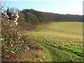 SP9404 : Grassland below Bellingdon by Andrew Smith