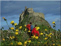NU1341 : Lindisfarne Castle by Ian Dalgliesh