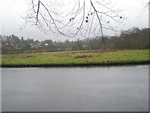 SU9948 : View across the River Wey to a meadow within Shalford Park by Basher Eyre