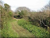 SX5646 : Coastal footpath runs through the woods behind Stoke Beach by Sarah Charlesworth