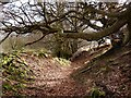 SO2811 : Sunken path south of the Punchbowl, Blorenge by Claire Seyler