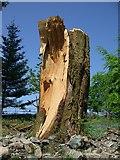 NY3404 : Fallen tree by Nick Barker