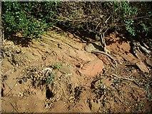 SO7334 : Red sandstone, the road to Bromesberrow by Bob Embleton