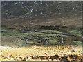 G6690 : Old farmhouse in Granny Ardara by Bart Whelan