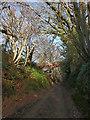 SU7823 : Sussex Border Path at Durleighmarsh by Chris Gunns